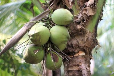 Kokoswasser – ein idealer Fitnessdrink!
