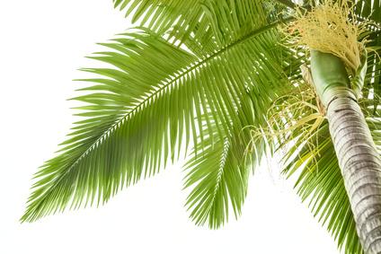 Kokosöl von den Philippinen