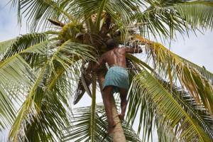 Kokosnussöl Sri Lanka