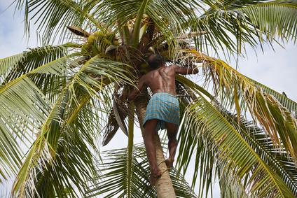 Kokosnussöl aus Sri Lanka