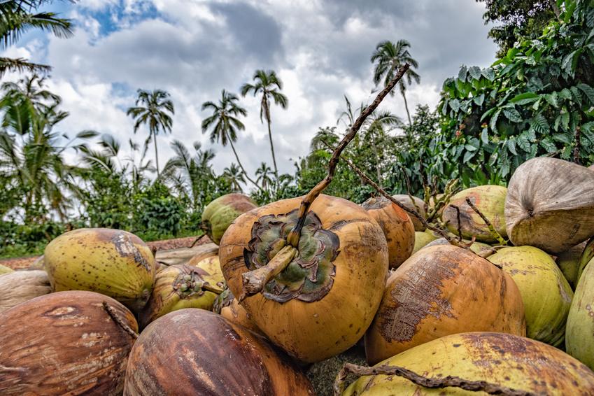 Kokosnussöl aus Indonesien