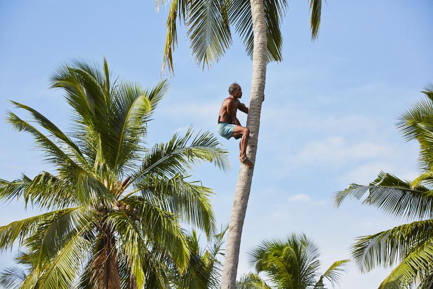 Kokosnussöl aus Indien